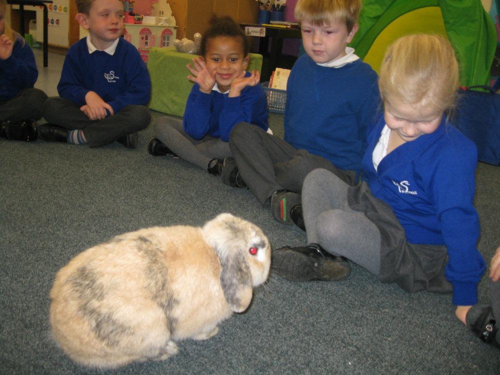 Rabbit 1r