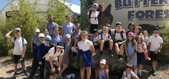 Lower KS2 Trip to Twycross Zoo